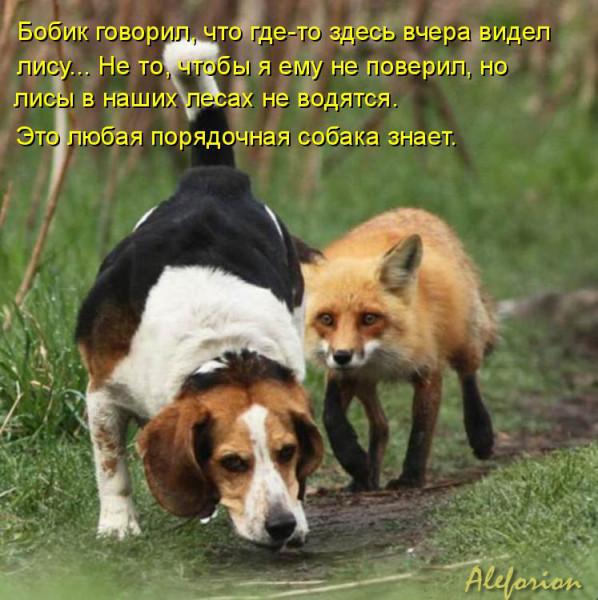 kotomatritsa_W