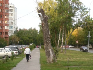 the poplar as a lamp -- Ekaterinburg, 2010