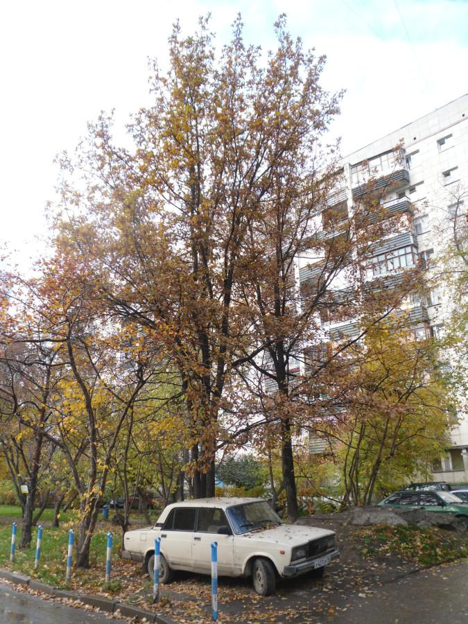 SAM_4802