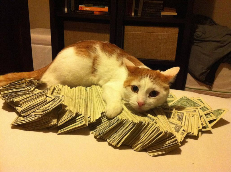котэ-деньги