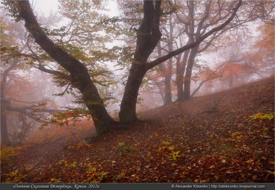 091_demerdji_10_2012-web-800