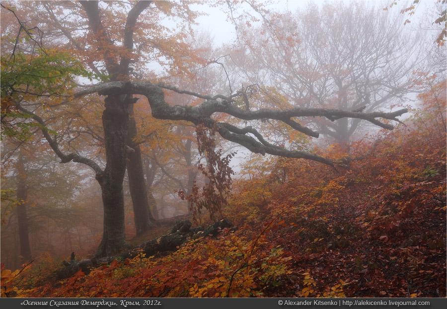 092_demerdji_10_2012-web-800