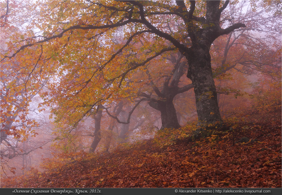093_demerdji_10_2012-web-800