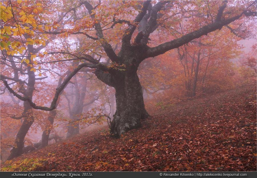 094_demerdji_10_2012-web-800