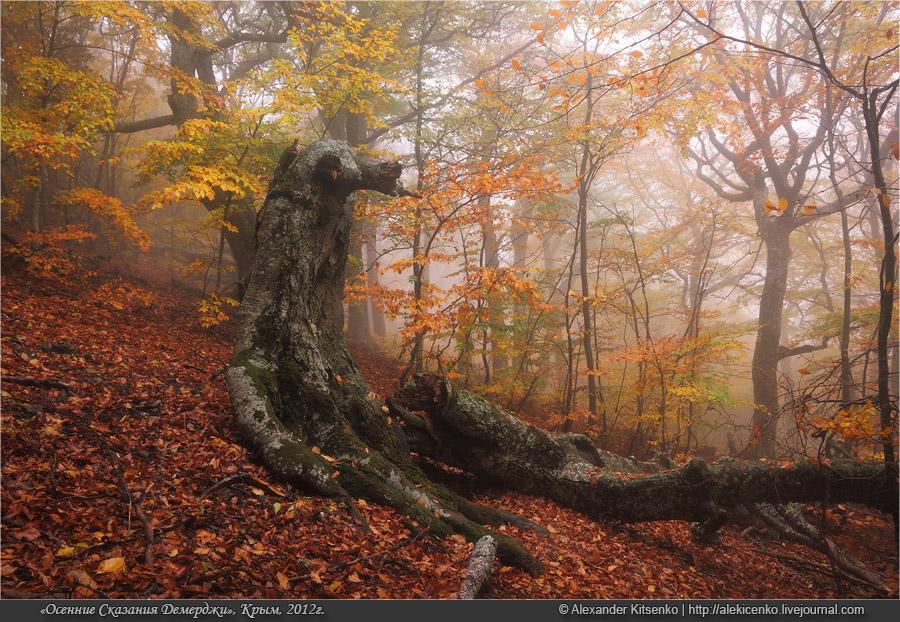 099_demerdji_10_2012-web-800