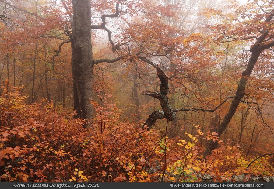 103_demerdji_10_2012-web-800