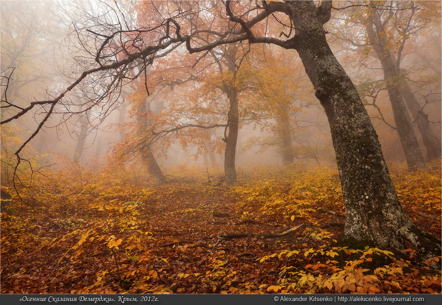 107_demerdji_10_2012-web-800