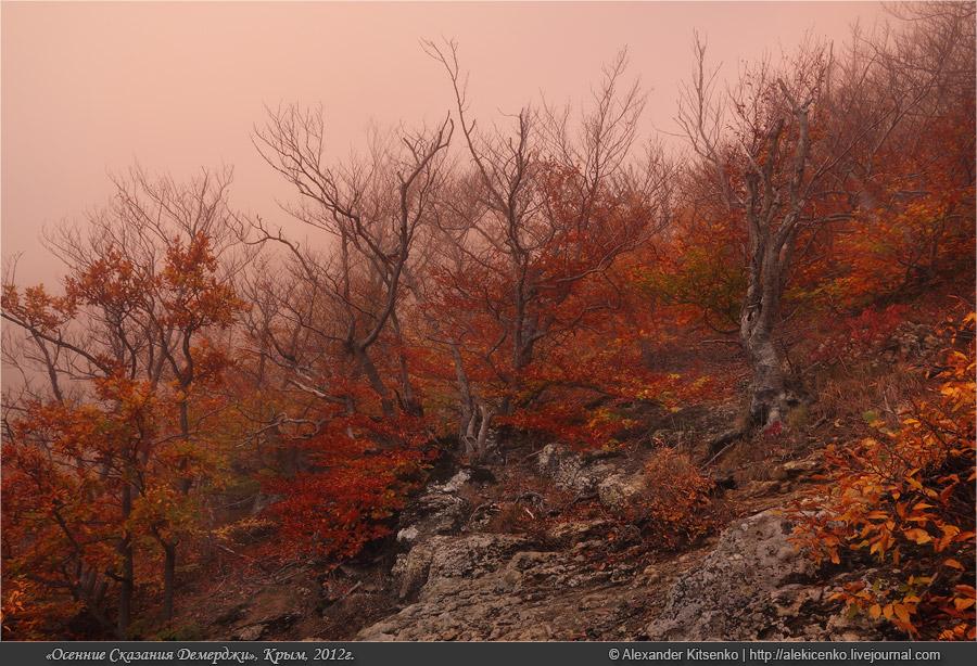 132_demerdji_10_2012-web-800