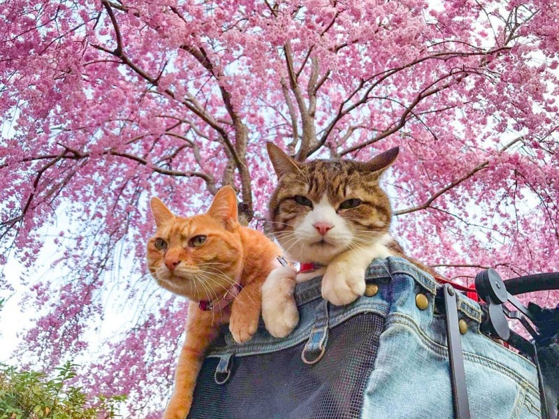 the.traveling.cats_165059098_1142472556216115_460205933422696826_n