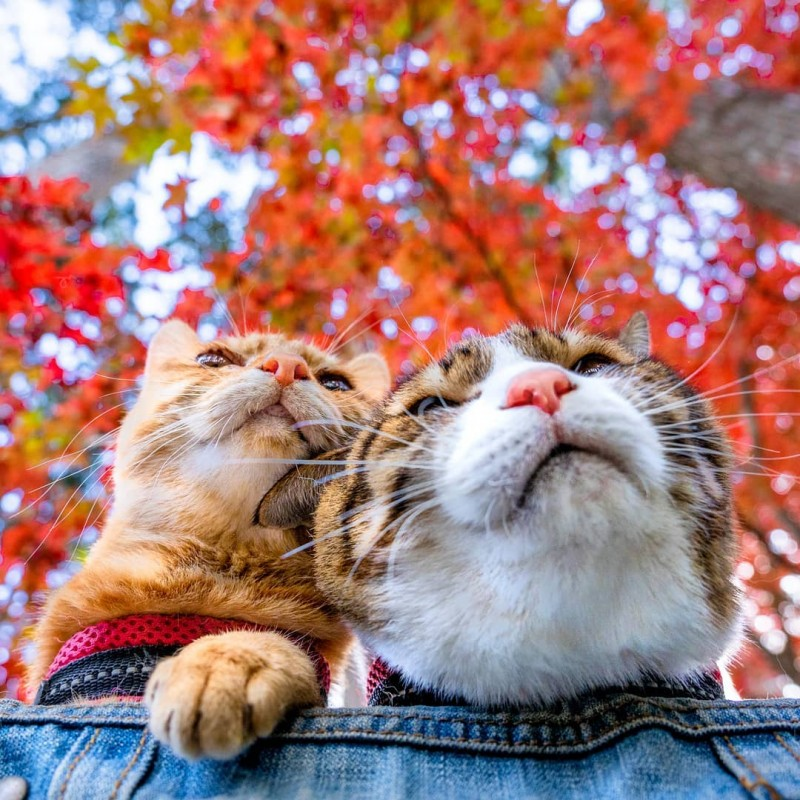 the.traveling.cats_75243112_1356481701175045_6465534603732466639_n