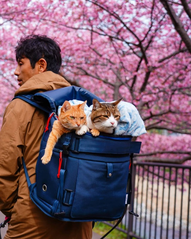 the.traveling.cats_83929971_639473163514904_7969829316371003650_n