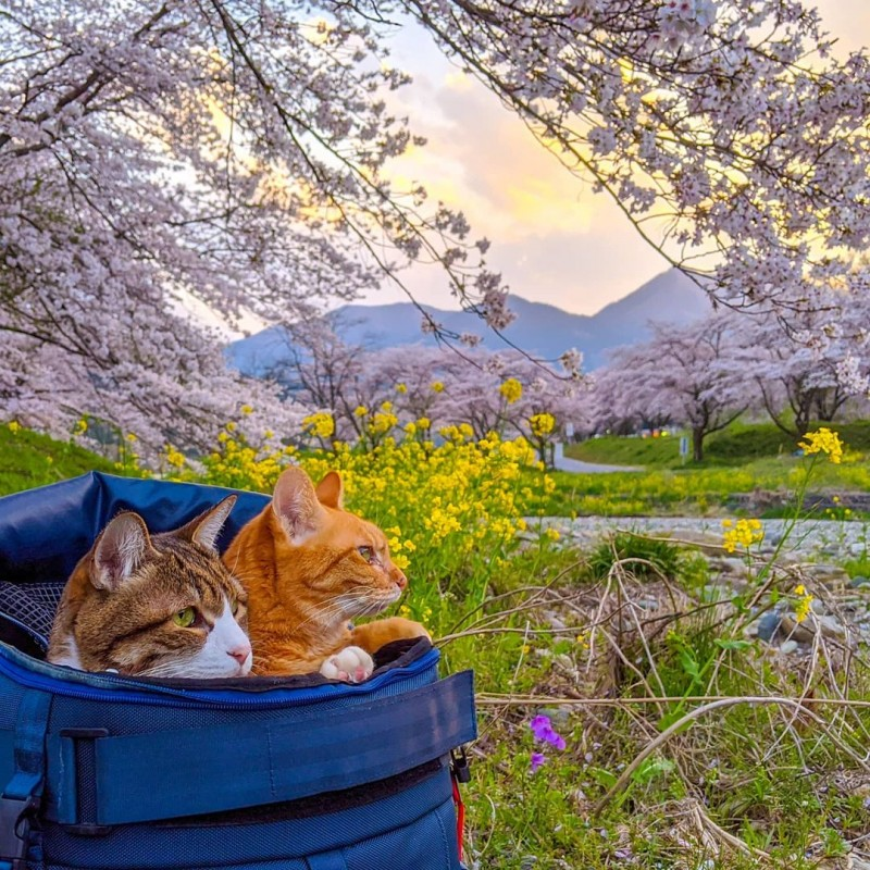 the.traveling.cats_93377128_612895675966446_8862463545786381092_n