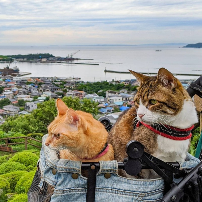 the.traveling.cats_105483451_655536641726606_2731551120785991516_n