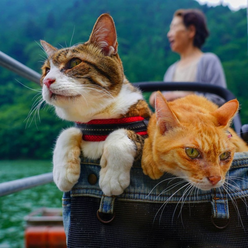 the.traveling.cats_116098563_872236183302154_8195971209674315821_n