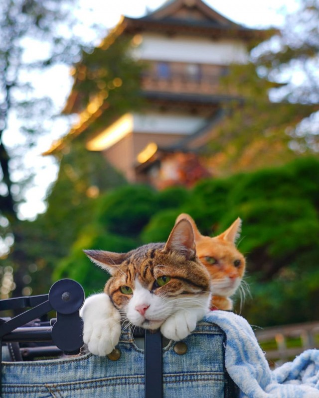 the.traveling.cats_120745764_974820479588541_6585034583264836650_n