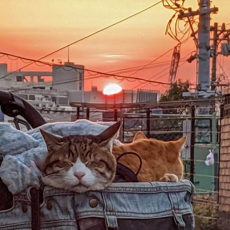 the.traveling.cats_150548810_443330663770270_3003775457995735603_n