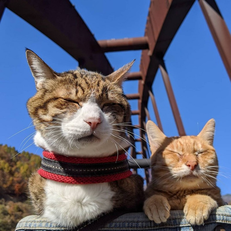 the.traveling.cats_151769855_101762861926768_8161727147474409521_n
