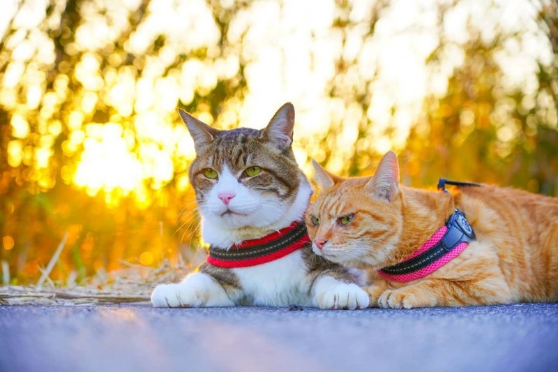 the.traveling.cats_152438364_343231143569999_4272083135826717268_n