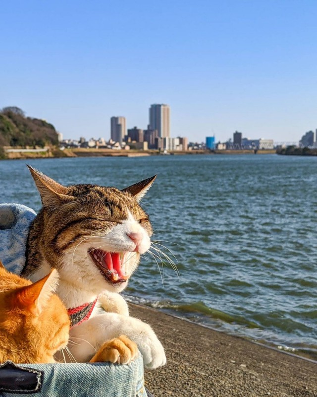 the.traveling.cats_162537504_909230053160462_6218795572564657699_n