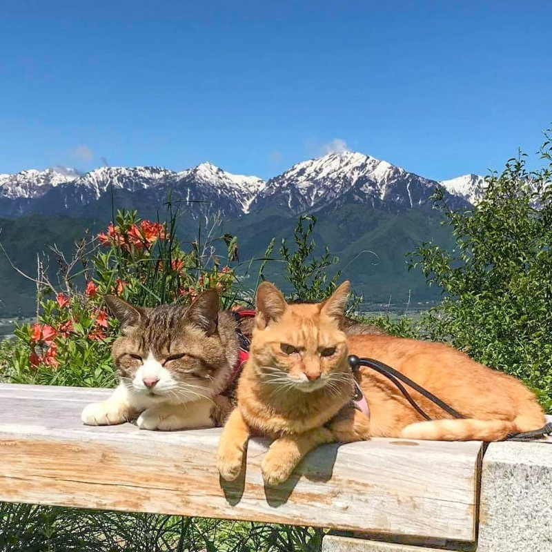 the.traveling.cats_168045209_818197442459938_1433154405399564204_n