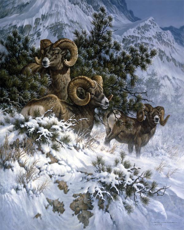Rams 150 1ax