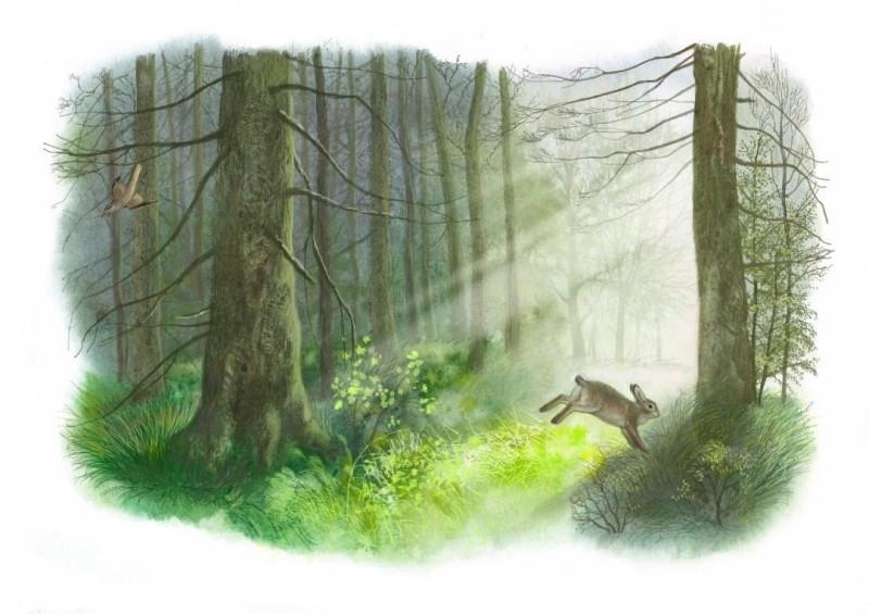 illustrator_dudarenko_103671412_2611346655772009_5065044995790646505_n