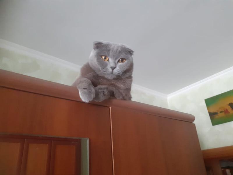 На шкафу