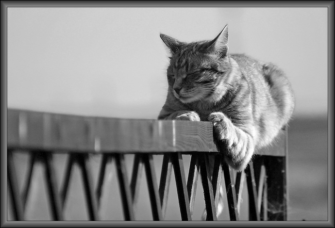 Любителям черно-белой фотографии не может не понравиться... 5