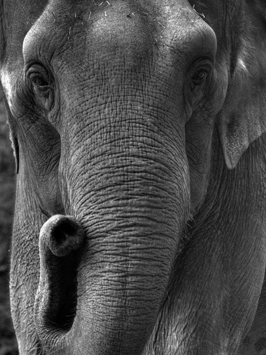 Любителям черно-белой фотографии не может не понравиться... 15