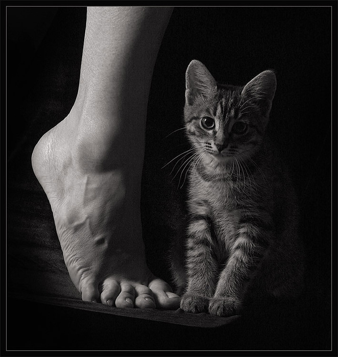 Любителям черно-белой фотографии не может не понравиться... 1