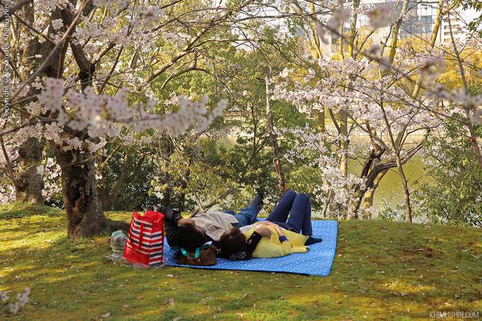 А а юге Японии уже начинает цвести сакура... 17