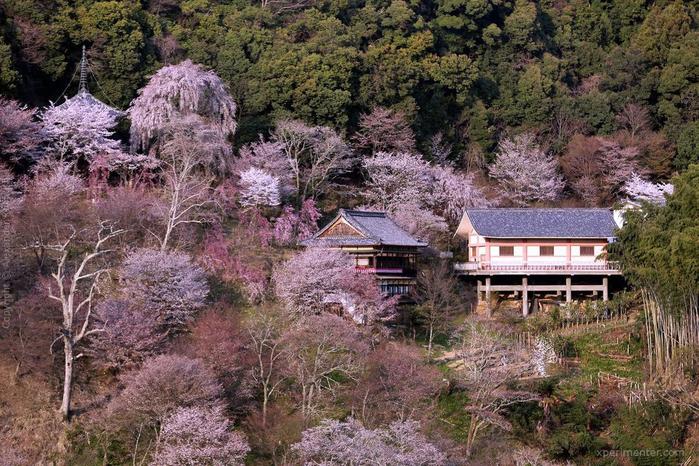А а юге Японии уже начинает цвести сакура... 20