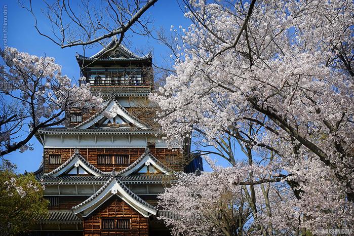 А а юге Японии уже начинает цвести сакура... 21