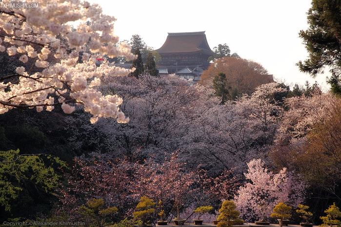 А а юге Японии уже начинает цвести сакура... 24