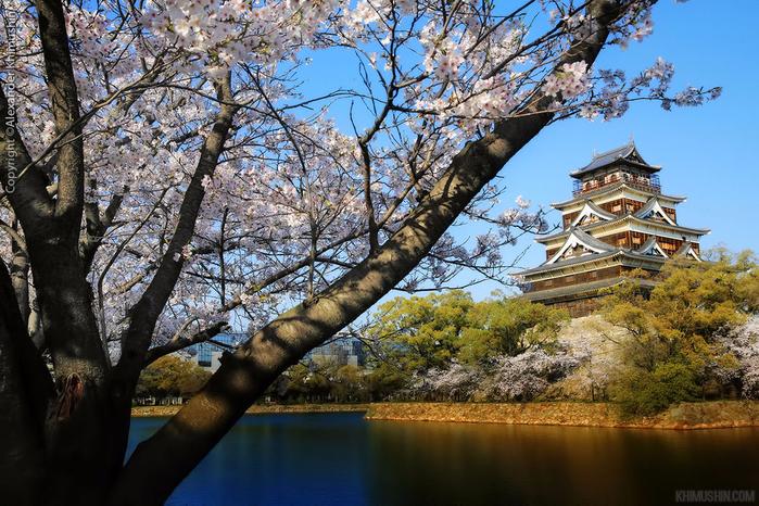 А а юге Японии уже начинает цвести сакура... 25