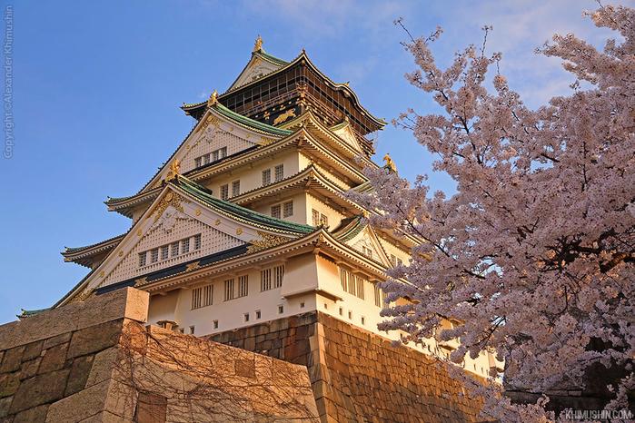 А а юге Японии уже начинает цвести сакура... 27