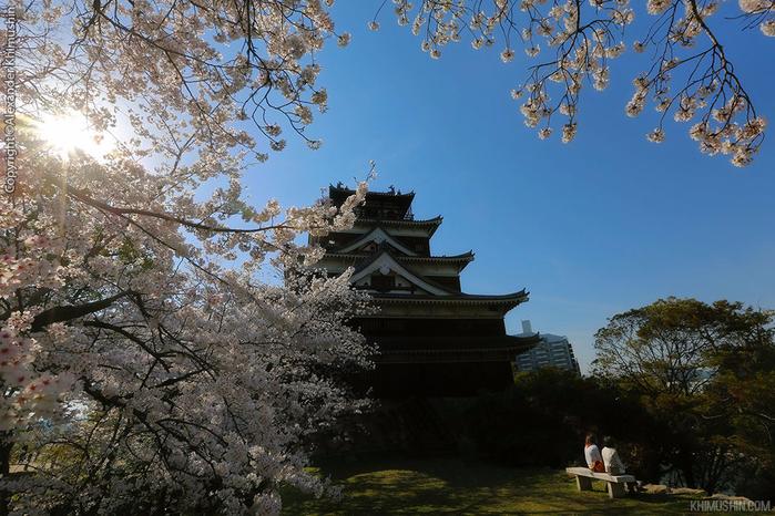 А а юге Японии уже начинает цвести сакура... 29