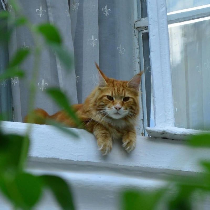 _vladyka_the_cat_105386725_189670662462470_1652788966886482879_n