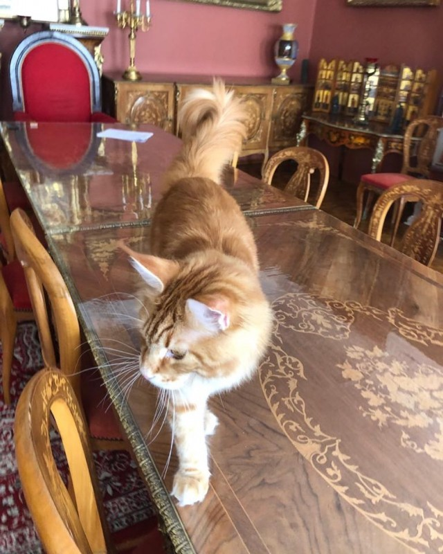 _vladyka_the_cat_106028441_142366357450759_7559265415992834072_n