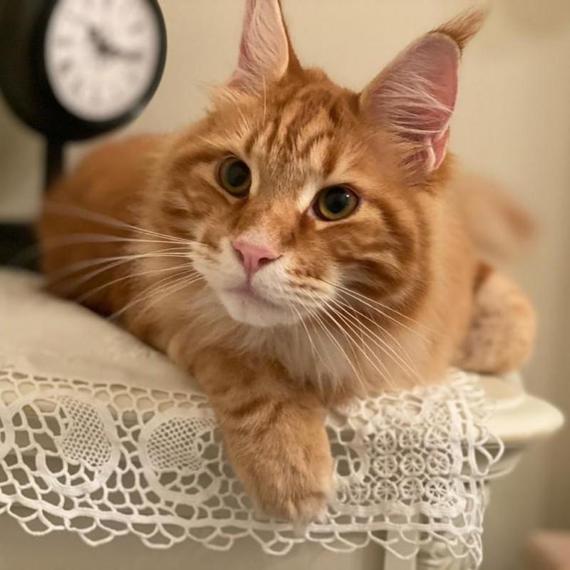 _vladyka_the_cat_116238859_287949672269246_7124364540829355790_n