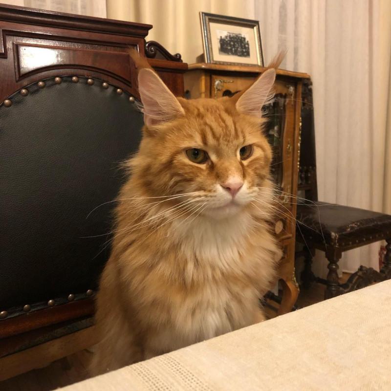 _vladyka_the_cat_121036372_1229430640762163_8372088131760641301_n