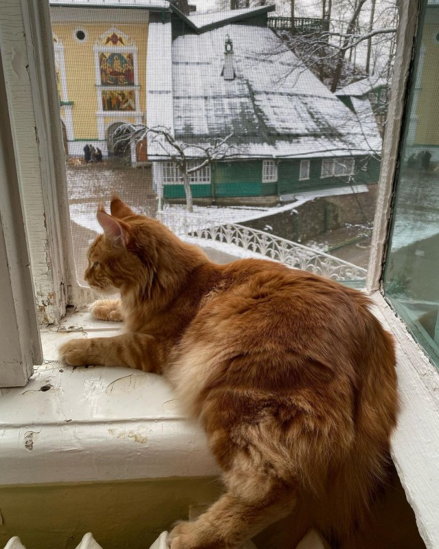 _vladyka_the_cat_128630807_755723425020604_2661384210858710131_n