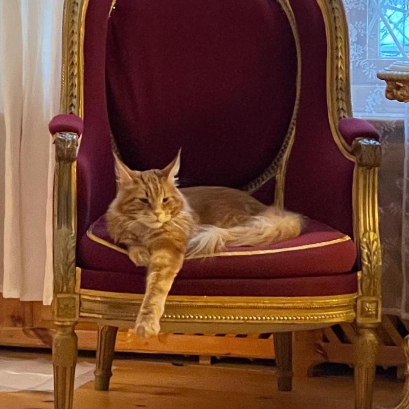 _vladyka_the_cat_140541061_238558364535721_672620214607008908_n
