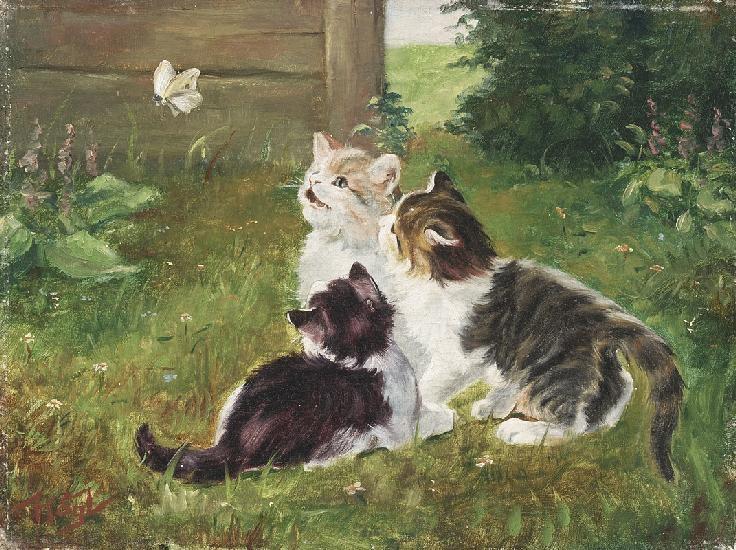 Drei Katzenkinder im Garten, die einem Schmetterling nachschauen