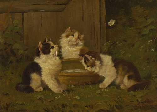 Katzen-Kцgl Kцgl