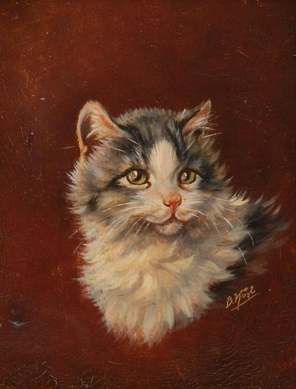 Porträt eines jungen Kätzchens