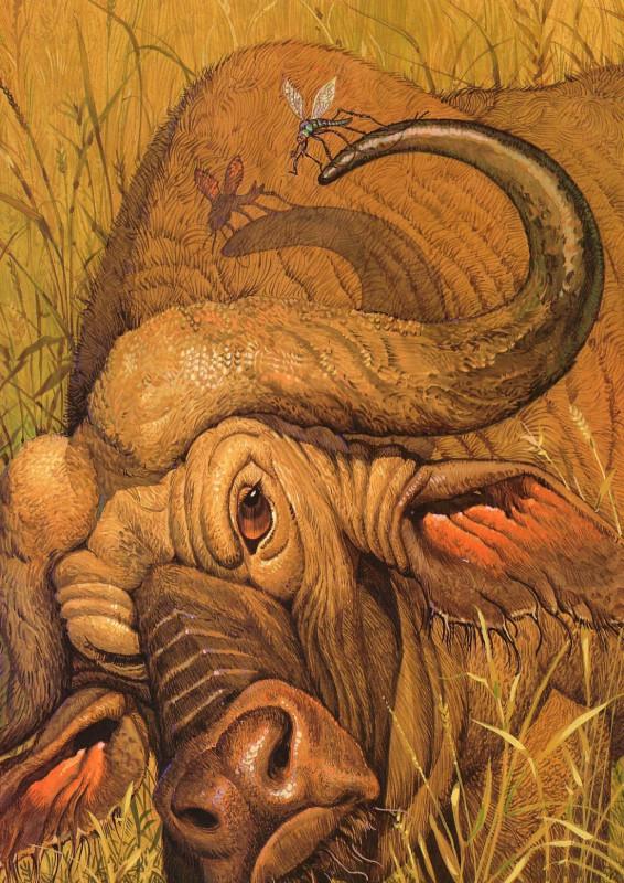 fop-(10)DonDaily-Aesop-Gnat-Bull