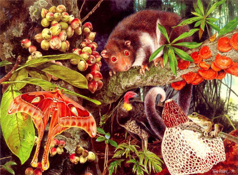 Herbert River Ringtail Possum
