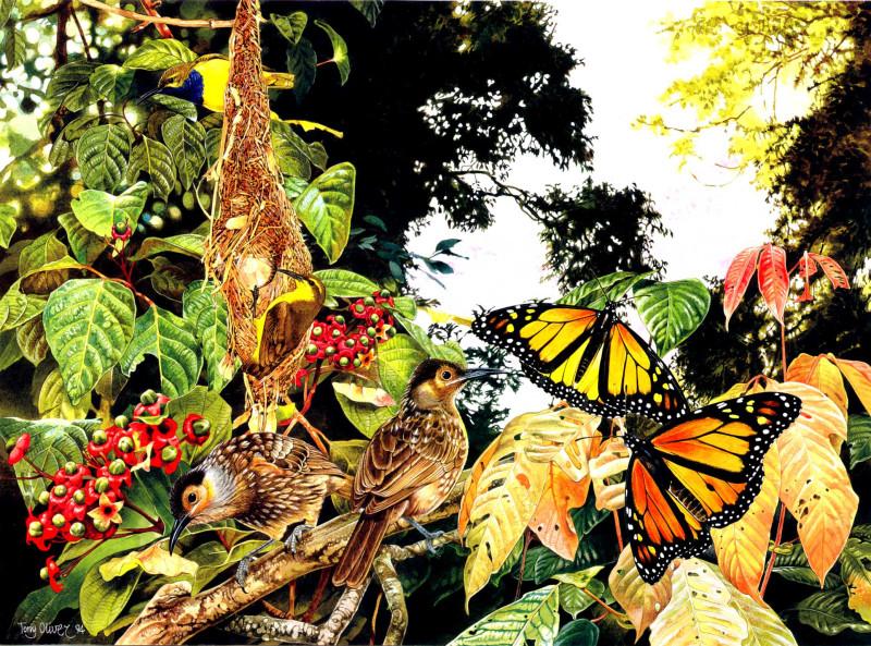 Macleays Honeyeater