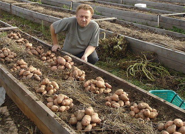 Какую картошку лучше всего сажать 706